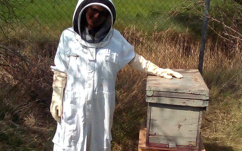 las abejas del campichuelo